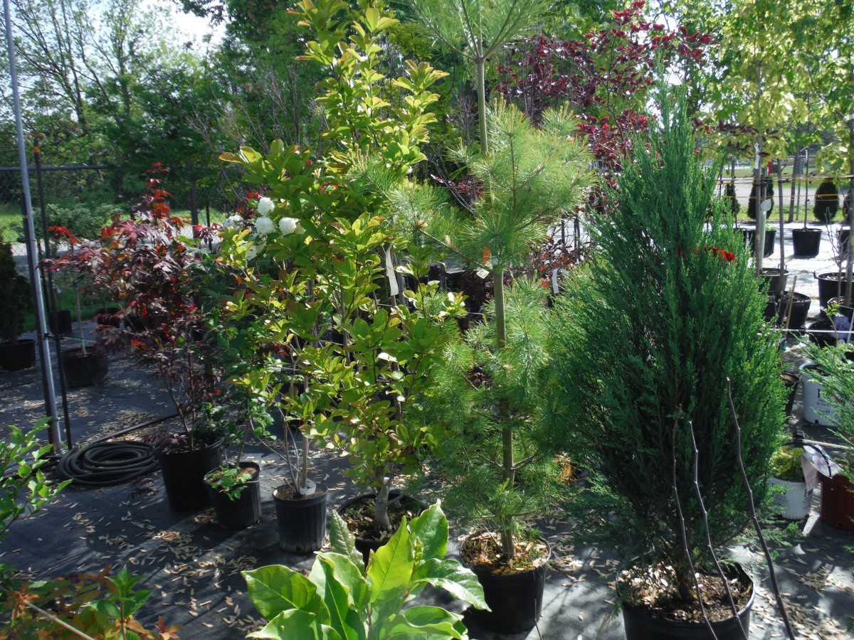 List Of Trees And Shrubs I Ordered For My New Garden Watch My