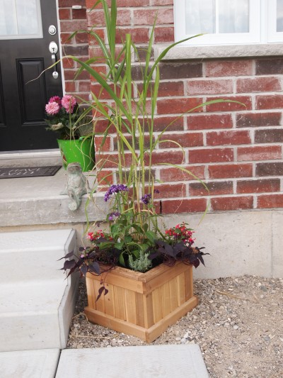 Planter with tall grass, 7 annuals and a lavender