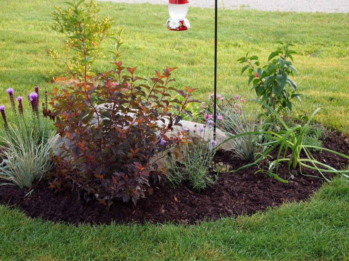 """Close up of the """"rock"""" garden with the new day lily, hummingbird feeder and mulch."""