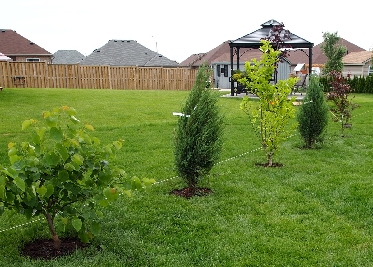 New trees from beside the Newport Plum