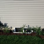 Butterfly bush garden with grass and annuals transplanted